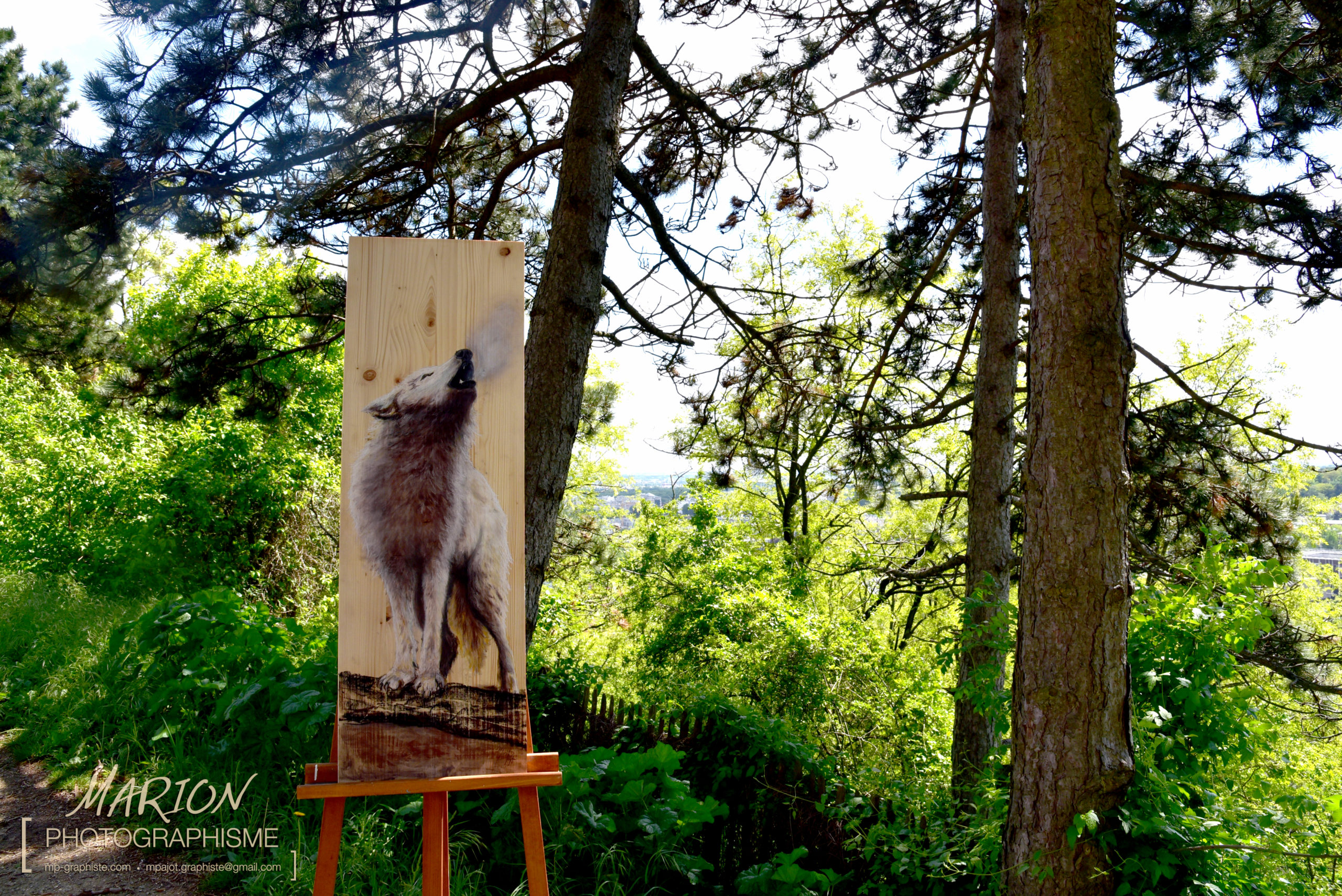 Loup, souffle de la forêt